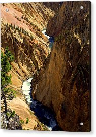 Grand Canyon Of The Yellowstone 2 Acrylic Print by Marty Koch