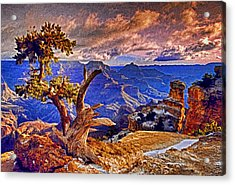 Grand Canyon Pine Acrylic Print by Dennis Cox WorldViews