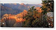 Grand Canyon South Rim - Red Berry Bush Along Path Acrylic Print
