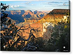 Grand Canyon South Rim - Sunset Through Trees Acrylic Print
