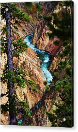 Grand Canyon  Yellowstone Acrylic Print by Russell  Barton