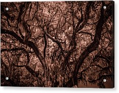Acrylic Print featuring the photograph Grand Daddy Oak Tree In Infrared by Louis Ferreira