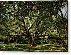 Grand Oak Tree Acrylic Print by Judy Vincent