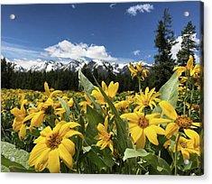 Grand Teton Mountains Acrylic Print