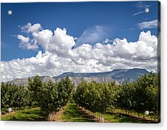 Grand Valley Orchards Acrylic Print