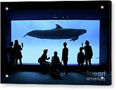 Grand Whale Acrylic Print