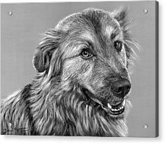 Granddog Kuper Acrylic Print