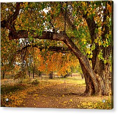 Grandfather Cottonwood Acrylic Print