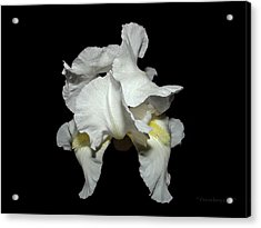 Grandma's White Iris Acrylic Print