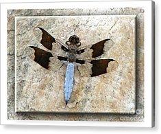 Granite Dragon Acrylic Print by Deborah Johnson