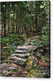 Granite Steps, Camden Hills State Park, Camden, Maine -43933 Acrylic Print