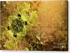 Grape Commodity Acrylic Print