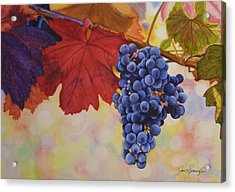 Grape Harvest Acrylic Print by Jan  Spangler