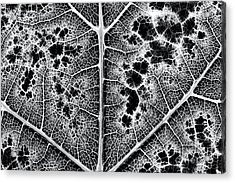 Grape Leaf Monochrome Acrylic Print by Tim Gainey