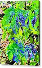 Grape Leaves Acrylic Print