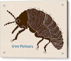 Grape Phylloxera Acrylic Print by Frank Tschakert
