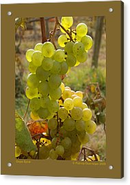 Grape Spiral Acrylic Print