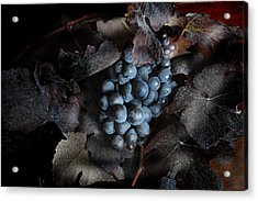 grape vine I Acrylic Print by Jon Daly