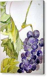 Grape Vine Acrylic Print by Mindy Newman