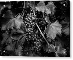 Grapes In Black And White Acrylic Print
