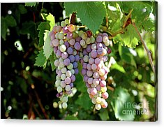 Acrylic Print featuring the photograph Grapes In Color  by Frank Stallone