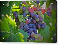 Grapes Acrylic Print by Kelly Wade