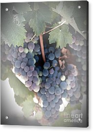Grapes On The Vine I Acrylic Print by Sherry Hallemeier