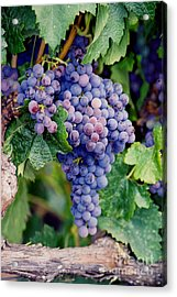 Acrylic Print featuring the photograph Grapes by Sandy Adams