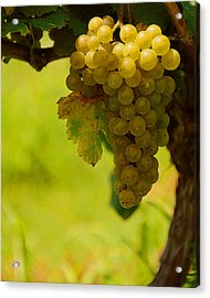 Grapes Acrylic Print by Travis Aston