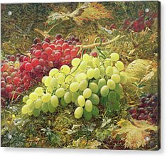 Grapes Acrylic Print by William Jabez Muckley