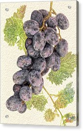 Luscious Grapes Acrylic Print