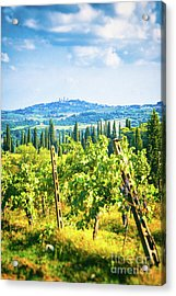 Acrylic Print featuring the photograph Grapevine In San Gimignano Tuscany by Silvia Ganora