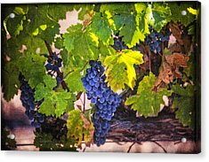 Grapevine With Texture Acrylic Print by Garry Gay
