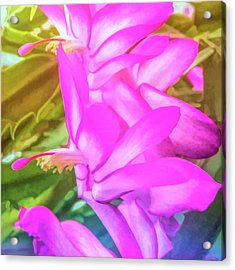 Acrylic Print featuring the photograph Graphic Rainbow Christmas Cactus Flower by Aimee L Maher Photography and Art Visit ALMGallerydotcom