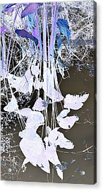 Graphic Reflection Acrylic Print