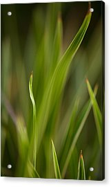 Grass Abstract 1 Acrylic Print by Mike Reid