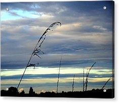 Grass Against Abstract Sky Acrylic Print