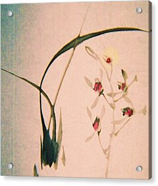 Grass And Buds Acrylic Print by JuneFelicia Bennett