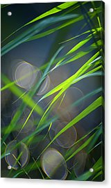 Grass And Evening Light Acrylic Print by Silke Magino