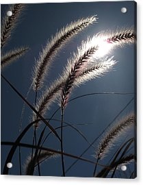 Grass And Sun  Acrylic Print