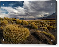 Grass Hat Acrylic Print by Aaron Bedell