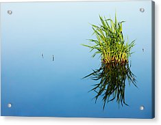 Grass In Blue Acrylic Print by Todd Klassy