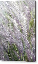 Acrylic Print featuring the photograph Grass Is More - Nature In Purple And Green by Ben and Raisa Gertsberg