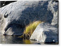 Grass Acrylic Print by Larry Darnell