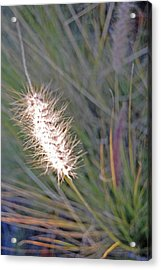 Grass Light Acrylic Print by Jean Booth