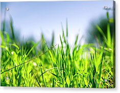 Acrylic Print featuring the photograph Grass by Nikos Stavrakas