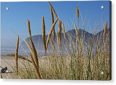 Acrylic Print featuring the photograph Grass Seeds On The Beach by Angi Parks