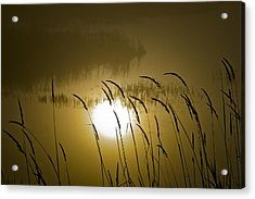 Grass Silhouettes Acrylic Print