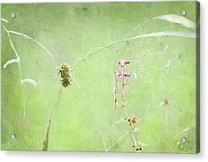 Grasses And Blooms Acrylic Print