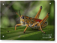 Grasshopper And Palm Frond Acrylic Print